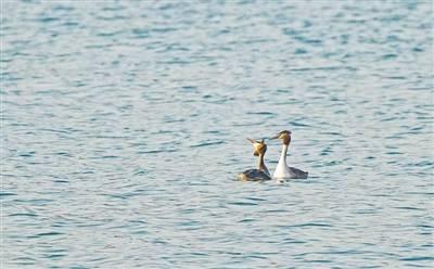 """春湖水暖""""鸭""""先知"""
