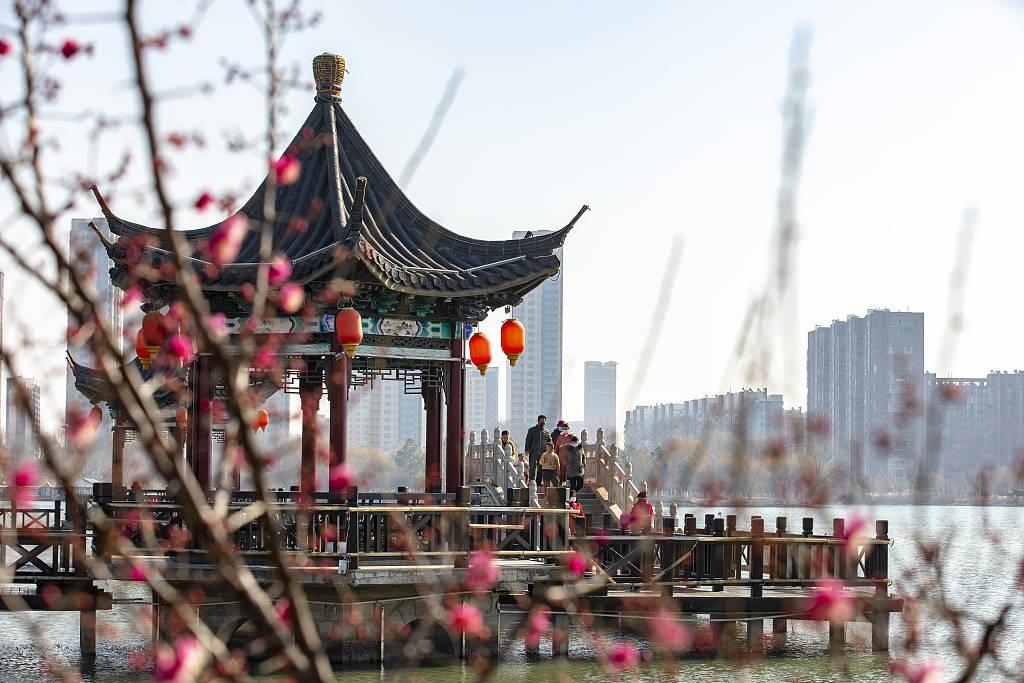 江苏连云港:红梅报春景色怡人