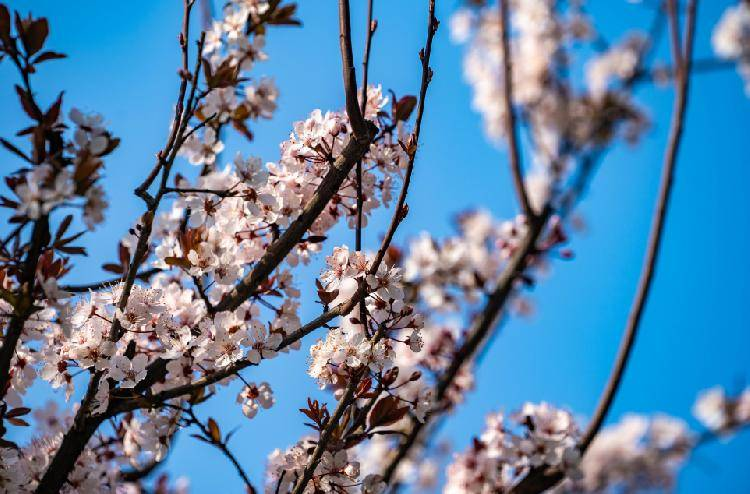 春风得意马蹄疾 一文看尽两江花!