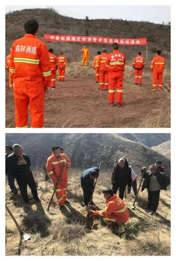 山西各地林草部门积极开展造林、森林防火工作  第3张