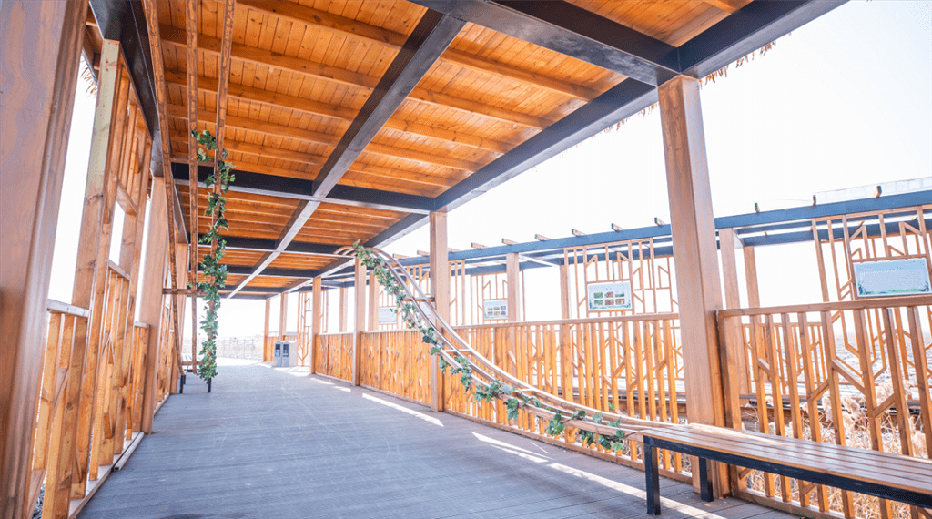 元宵节起崇明西沙湿地恢复对外开放 游园需实名制预约