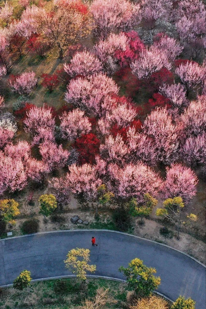 比杭州秀美,比厦门文艺!它曾是世界No.1,3月将迎来最美的时刻