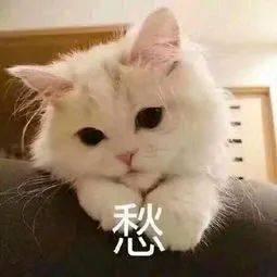 你要,我来!杭州小微企业精准服务的机会来了!