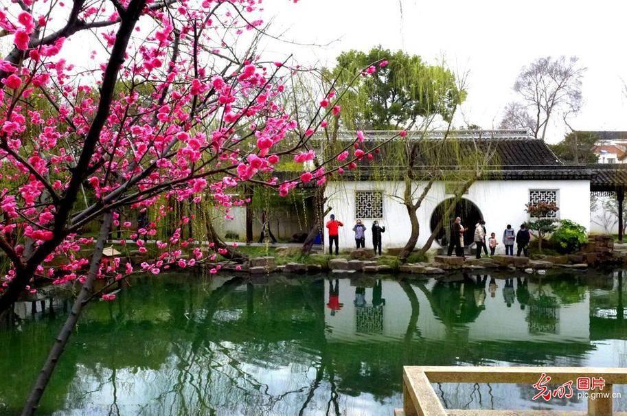 Visitors view plum blossoms in E China's Suzhou
