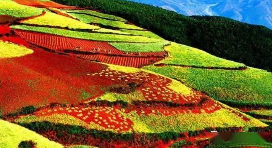 乡村振兴农旅项目应如何规划与建设?全国样板如何做?