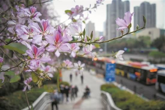 春日赏花正当时!