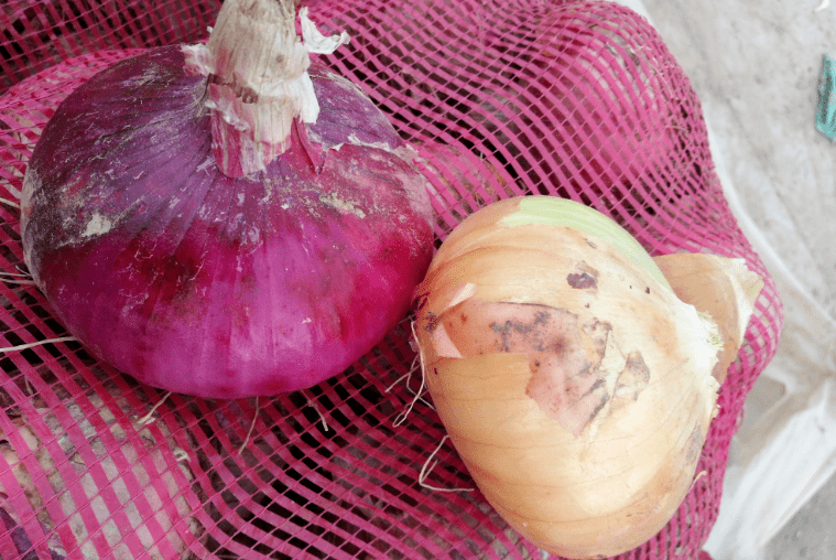 """买洋葱时,""""紫皮""""和""""黄皮""""选哪种?很多方面不一样,别弄错了"""