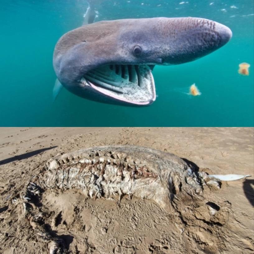 英海滩现神秘海兽 英国海滩现神秘海兽尸体无头无四肢是什么新生物?