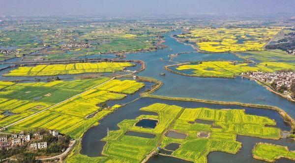 芜湖响水涧:油菜花开满眼春
