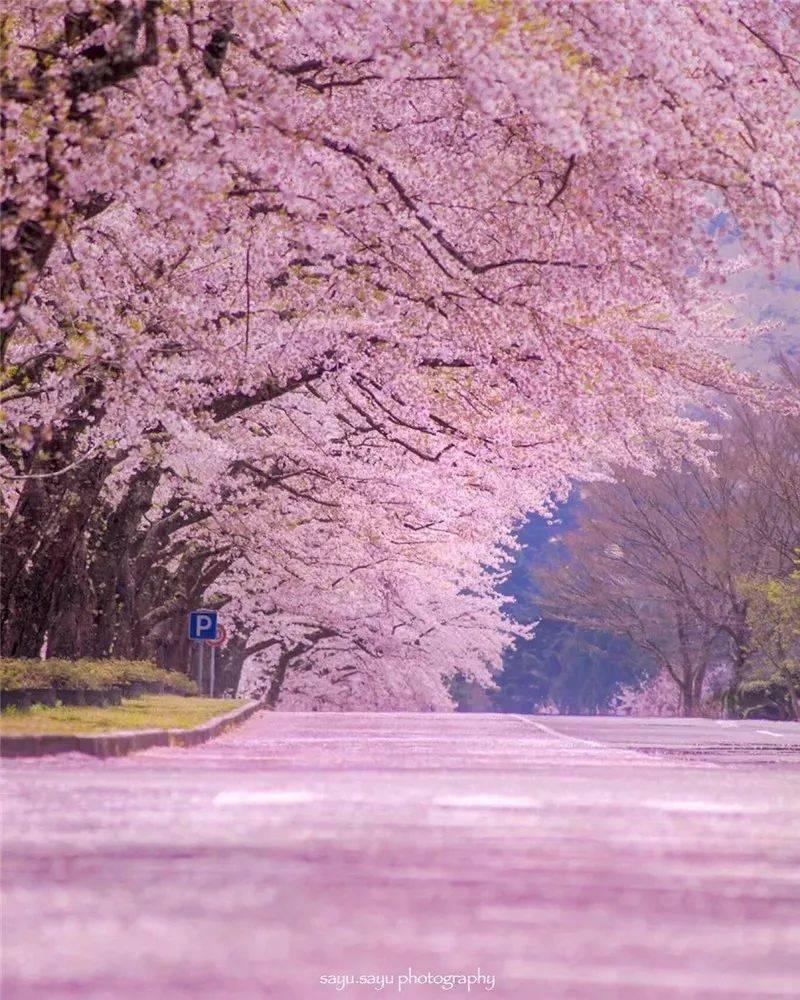 生活万岁:三月,相约在最美的春光里 网络快讯 第3张