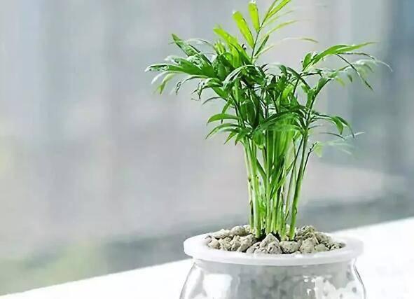 7种颜值超高还超好养亚虎体育app的植物,随便怎么养都能给