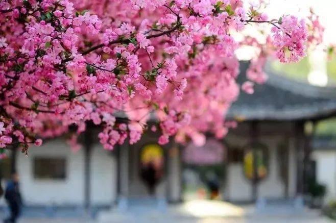 wps下一页:三月桃花开,春天按时来 网络快讯 第4张