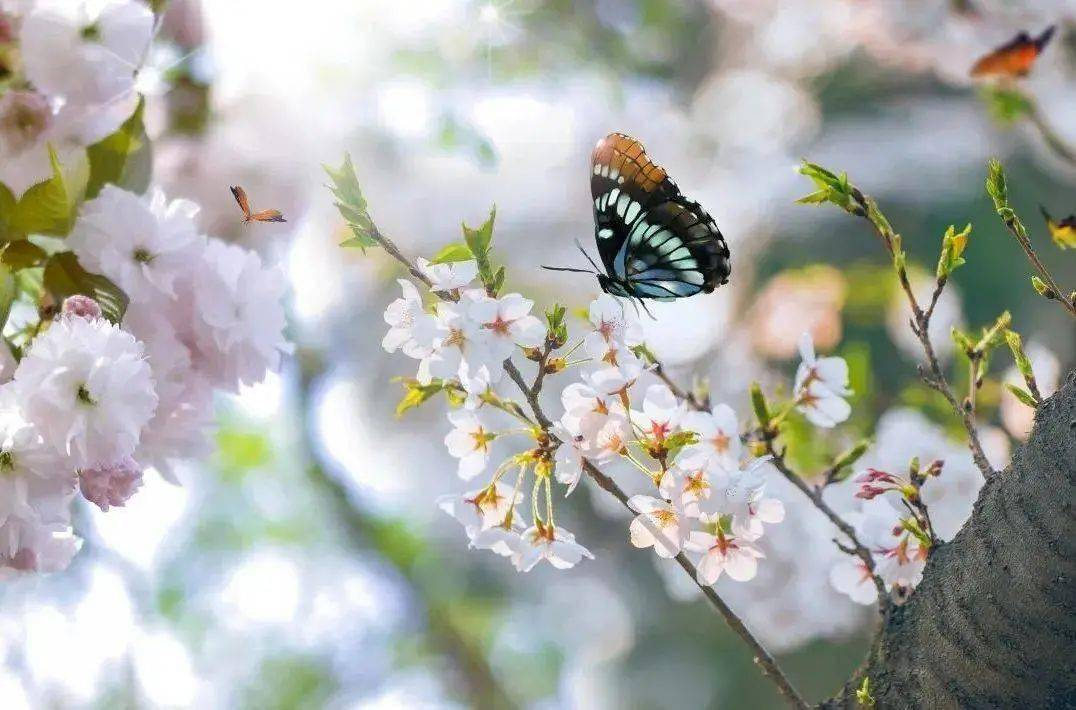 wps下一页:三月桃花开,春天按时来 网络快讯 第7张