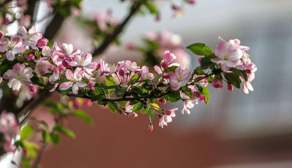 花朵竞相绽放 春光芬芳迷人
