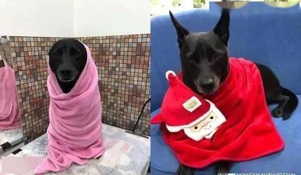 狗狗坐在关公面前忏悔过错,虔诚模样让人笑翻!