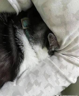 家里有水电工师傅来访,家里宾士猫吓到不肯露脸......