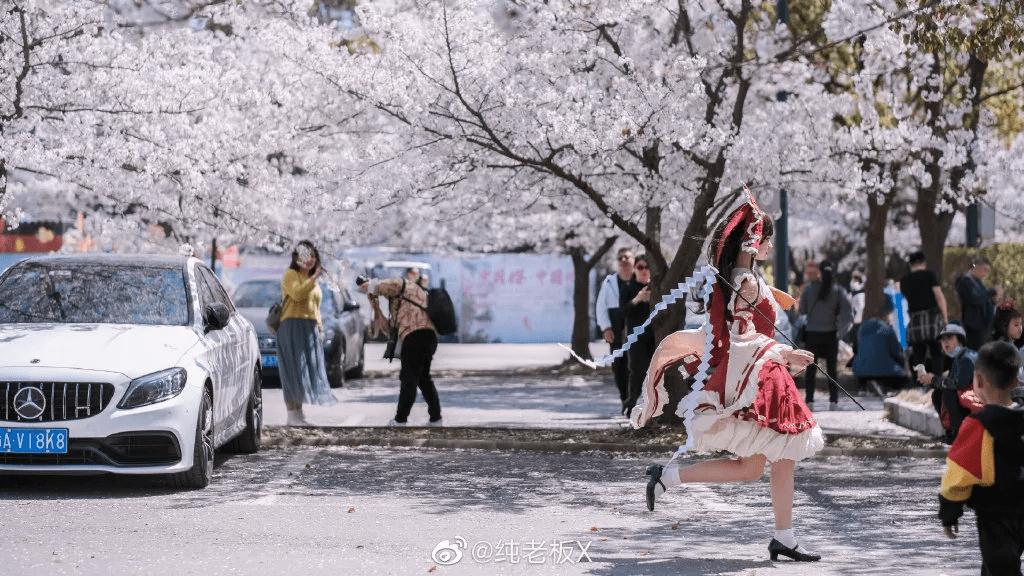 网友们热传的樱花树下巫女小姐姐:灵梦coser本尊找到了_安利