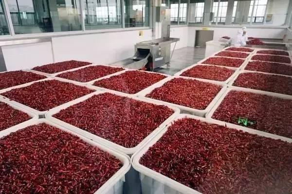 去中国辣椒之乡采购石柱红辣椒 展开全文 饮食的江湖里
