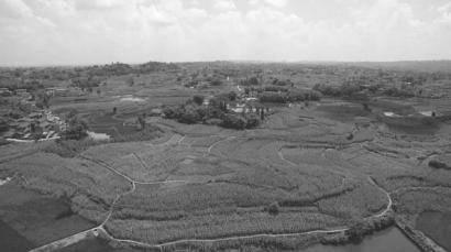 自贡市沿滩区 昔日撂荒地 今朝丰收田