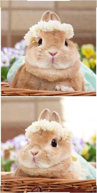 春日里的花花兔兔~