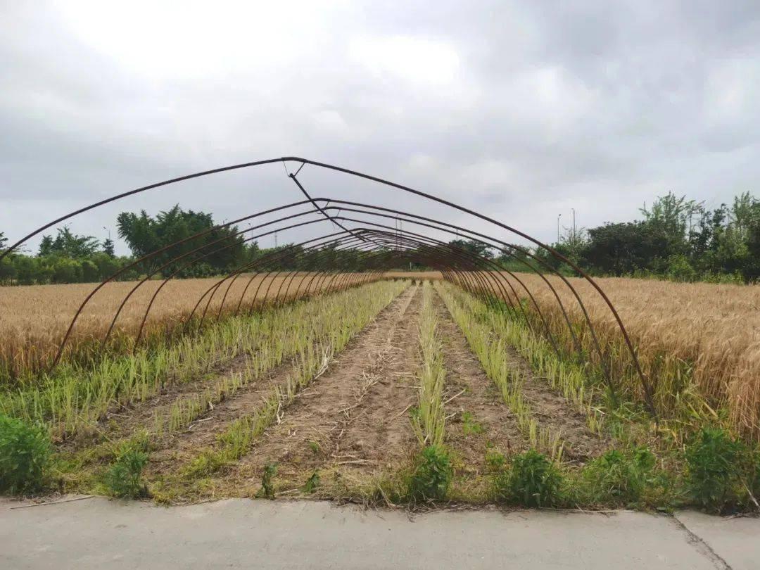 大棚蔬菜种植利润与成本计算 - 农业种植网