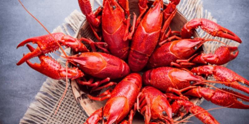 日本拟禁止进口小龙虾