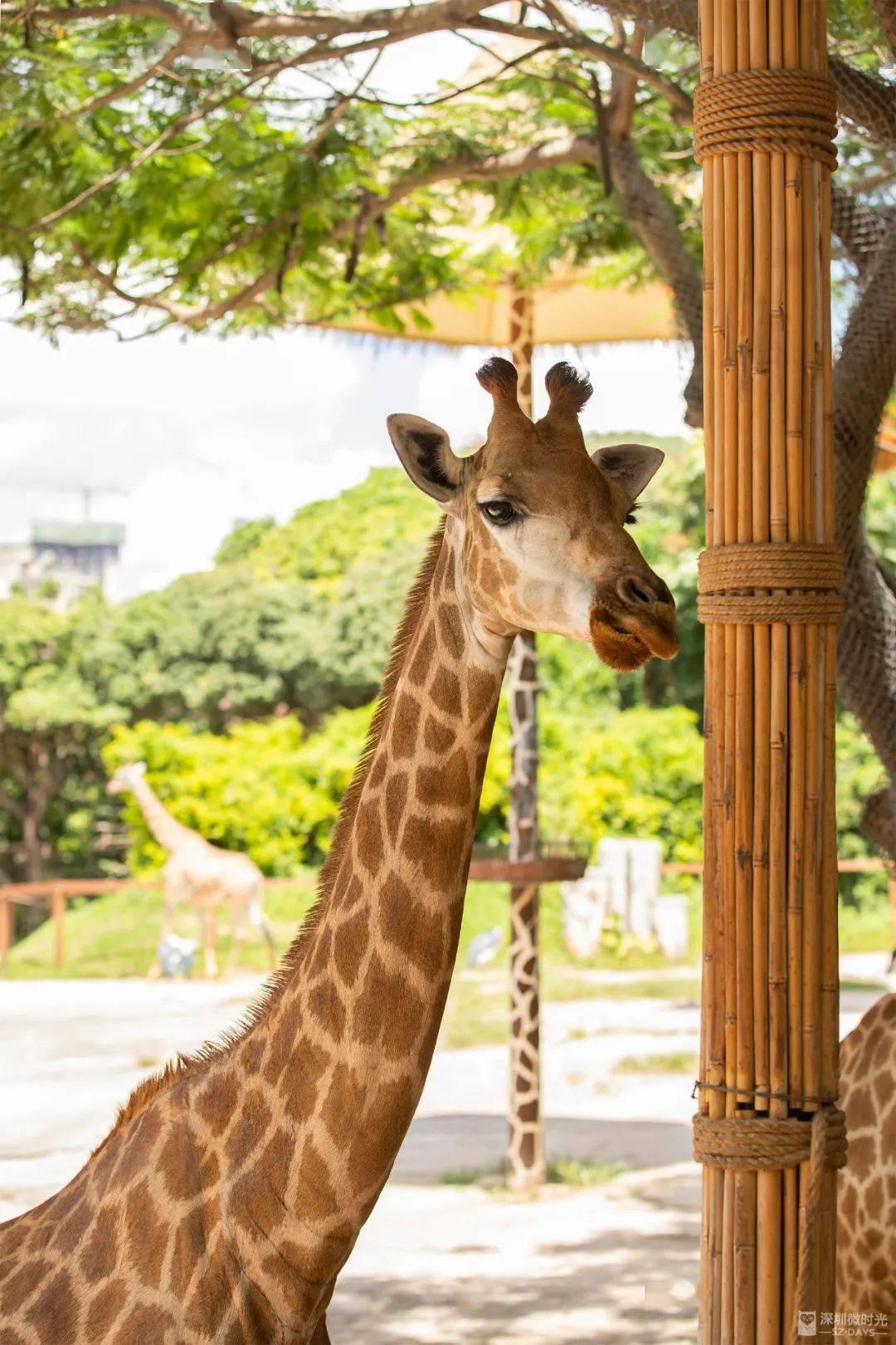 240元一张门票,深圳野生动物园值得去吗?