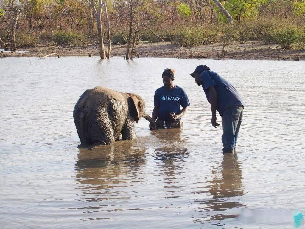 梦见自己照顾一头小象 梦到两头小象睡在我旁边