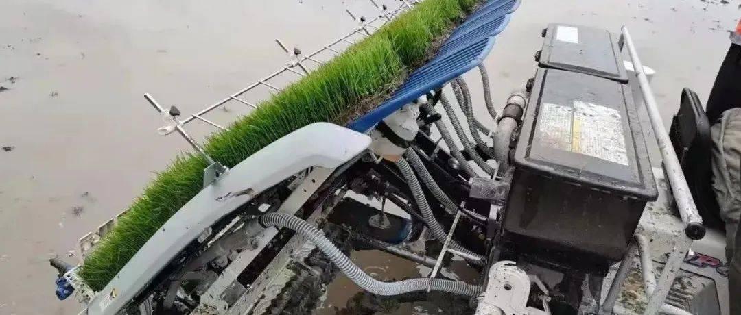 北大荒农业先进适用技术(五)——水稻变量施肥技术